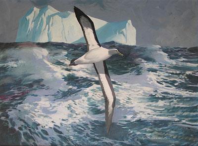 Keith Shackleton Artist Albatross with Iceberg.