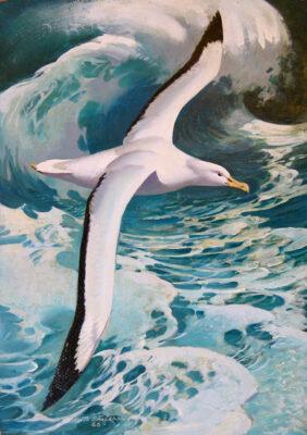 Keith Shackleton artist Albatross over a wave.
