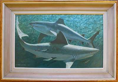 Keith Shackleton Artist Whitetip Sharks 1976
