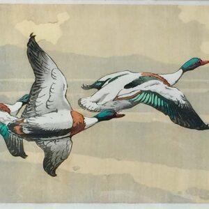 Allen William Seaby woodcut flying ducks