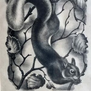 Eileen Mayo Squirrel Wodblock Print