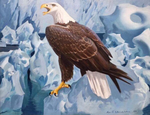 Keith Shackleton American Bald Eagle