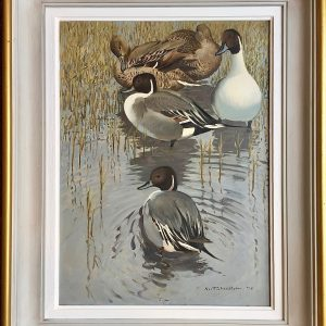 Keith Shackleton Artist signed oil painting Northern Pintail ducks - For sale