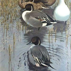 Keith Shackleton Artist oil painting Northern pintail duck